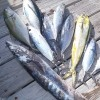 What you catch outside the reef in Belize